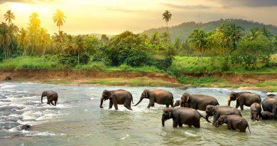 Kom helt tæt på eksotiske oplevelser på Sri Lanka
