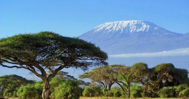 Oplev savannen og de vilde dyr i Tanzania