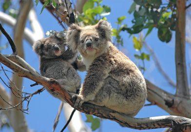 Start din Australien-rejse i Melbourne, Victoria